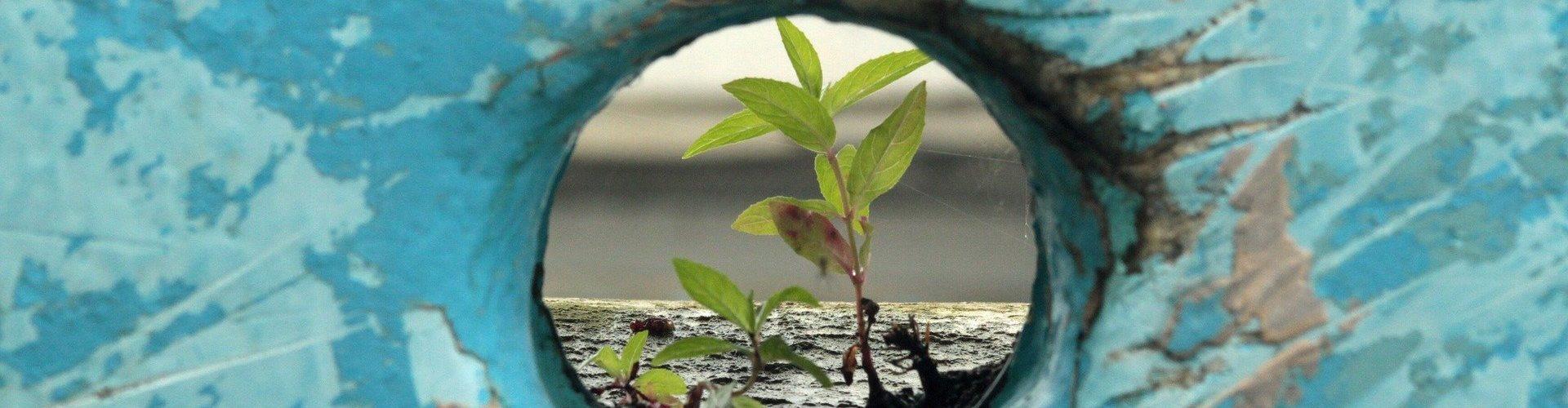 Resilienza: risalire sulla barca rovesciata | Mele Vanessa Psicoterapeuta Bologna Anzola Valsamoggia Calcara